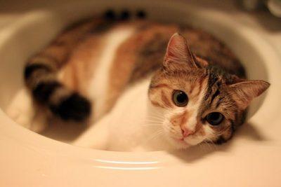 cat lovers' community